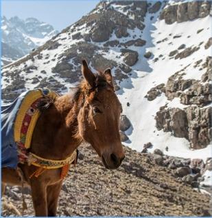 3-DAYS-IMLIL-AND-OURIKA-VALLEY-TREK- Atlas Trekking