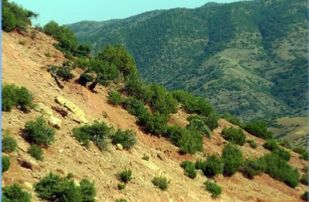 4-DAYS-BERBER-VILLAGES-VALLEYS-TREK-309x202 Home